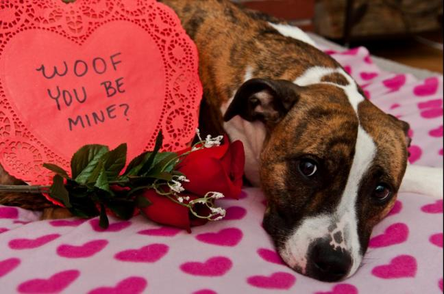 Survey-Valentines-revelers-to-spend-703-million-on-gifts-for-pets